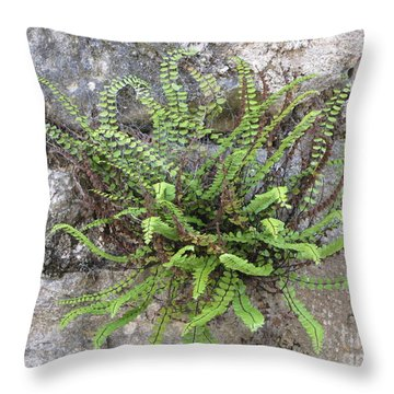 Fern Tendrils  Throw Pillow