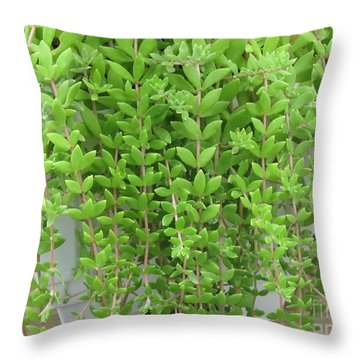 Throw Pillow featuring the photograph Fern by Tina M Wenger