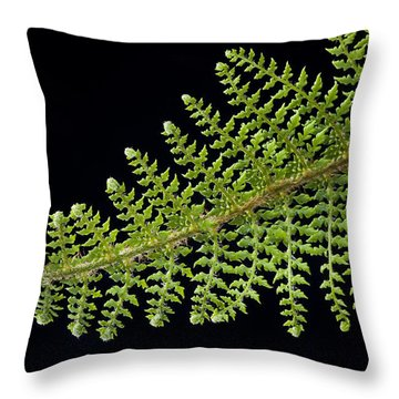 Fern With Raindrop 2 Throw Pillow by Trevor Chriss