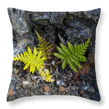 Ferns In Volcanic Rock Throw Pillow