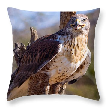 Ferruginous Hawk Throw Pillow