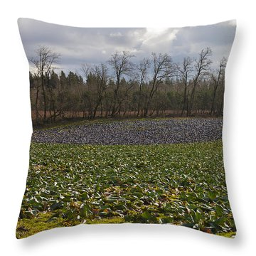 Field Of Color 2 Throw Pillow by Belinda Greb