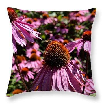 Field Of Echinaceas Throw Pillow by Scott Lyons