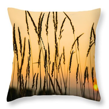 Field Of Gold Throw Pillow