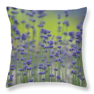 Field Of Lavender Flowers Throw Pillow