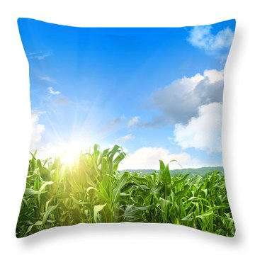 Field Of Young Corn Growing Against Blue Sky Throw Pillow
