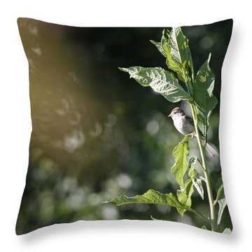 Field Sparrow Throw Pillow by Melinda Fawver