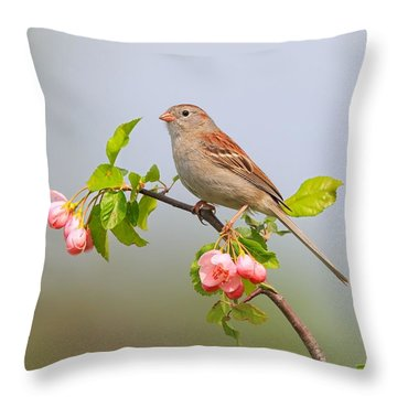 Field Sparrow On Apple Blossoms Throw Pillow by Daniel Behm