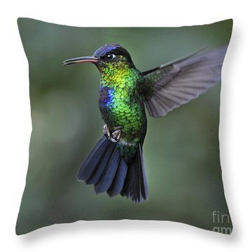 Fiery-throated Hummingbird..  Throw Pillow