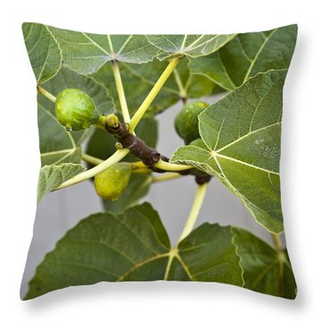 Figalicious Throw Pillow by David Millenheft