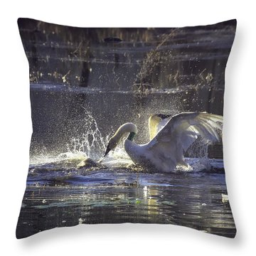 Fighting Swans Boxley Mill Pond Throw Pillow by Michael Dougherty