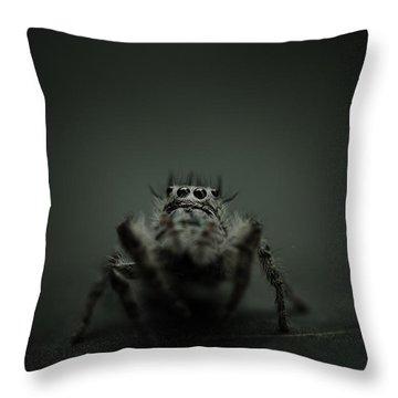 Filbert The Jumping Spider Throw Pillow