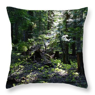 Throw Pillow featuring the photograph Filtered Sunlight Peace by Ben Upham III