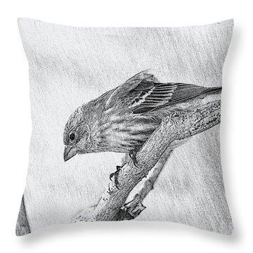 Finch Digital Sketch Throw Pillow