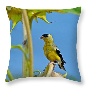 Finch Finale Throw Pillow by Gwyn Newcombe