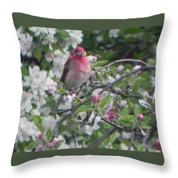 Finch In Apple Tree Throw Pillow