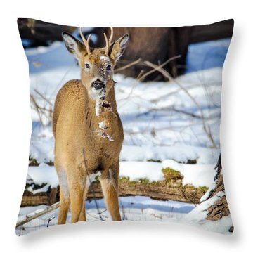Finding Leaves Throw Pillow