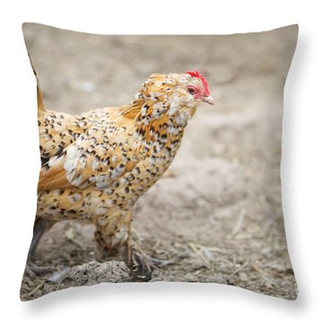 Throw Pillow featuring the photograph Fine Lady by Erika Weber