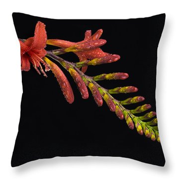Fire And Water Throw Pillow by Trevor Chriss