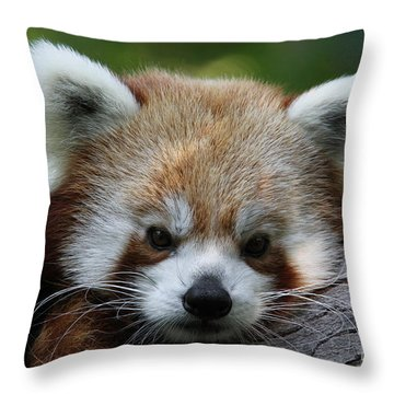 Throw Pillow featuring the photograph Fire Fox by Judy Whitton