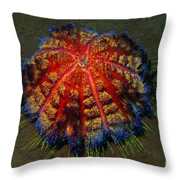 Fire Sea Urchin Throw Pillow by Sergey Lukashin