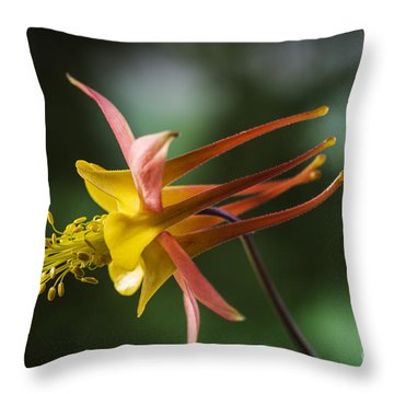 Firecracker Throw Pillow by Trevor Chriss