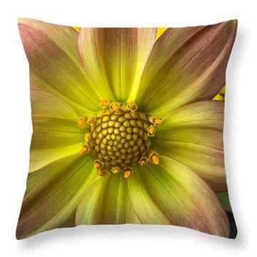 Fireworks Dahlia Throw Pillow by Garry Gay