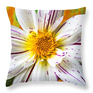 Fireworks Dahlia White And Pink Throw Pillow by Garry Gay