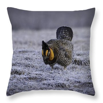 First Light 4 Throw Pillow by Thomas Young