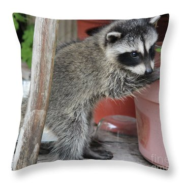 First Look At Baby Coonie Throw Pillow by Kym Backland