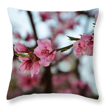 First Spring Blossoms Throw Pillow