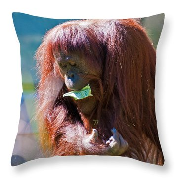 First Things First Throw Pillow by Donna Proctor
