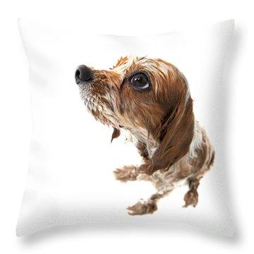 Fisheye Wet Archie Throw Pillow by Jane Rix
