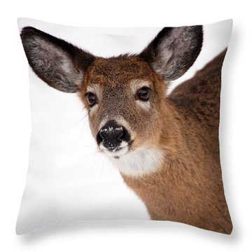 Fits Those Ears Throw Pillow by Karol Livote