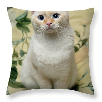 Flame Point Siamese Cat Throw Pillow by Amy Cicconi