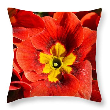 Flamenco Look Throw Pillow by Felicia Tica