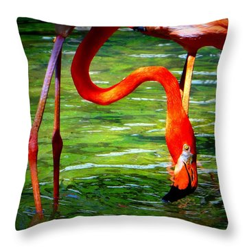 Flamingo Throw Pillow by David Mckinney