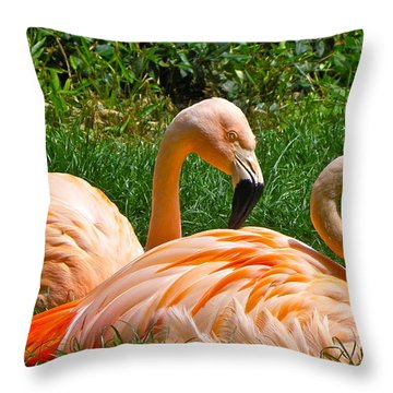 Flamingo Duo Throw Pillow by Eve Spring