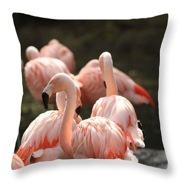 Flamingo Throw Pillow by Edward R Wisell