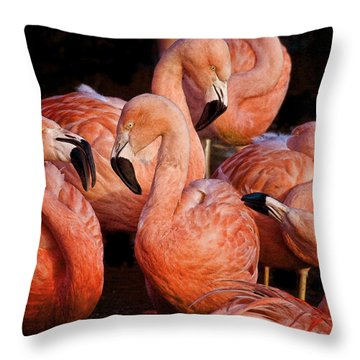 Throw Pillow featuring the photograph Flamingo Lingo by Brian Tarr