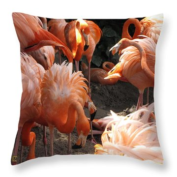 Throw Pillow featuring the photograph Flamingos by Beth Vincent