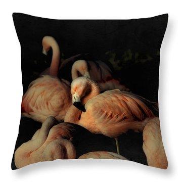 Flamingos In Repose Throw Pillow
