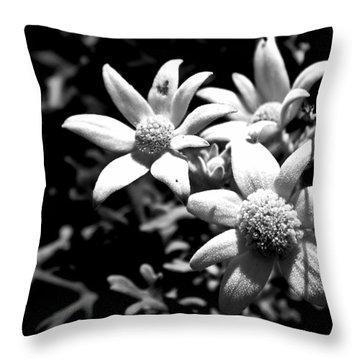 Throw Pillow featuring the photograph Flannel Flower by Miroslava Jurcik