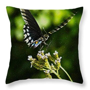Flattering Flutter Throw Pillow