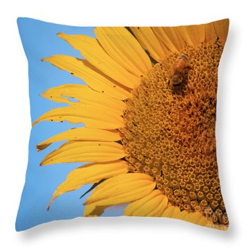 Throw Pillow featuring the photograph Flawed Beauty by Rima Biswas