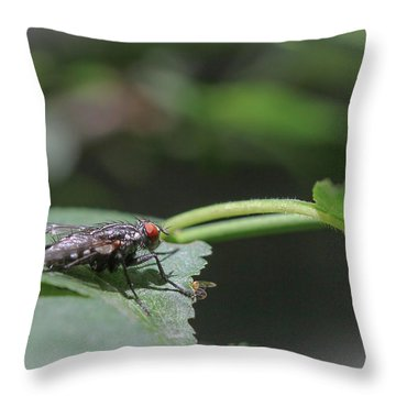 Throw Pillow featuring the photograph Flesh Fly - Sacrophaga Variegata by Jivko Nakev