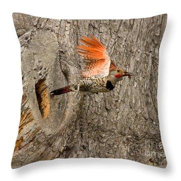 Flicker Flight Throw Pillow by Alice Cahill