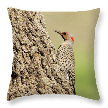 Flicker On Tree Trunk Throw Pillow