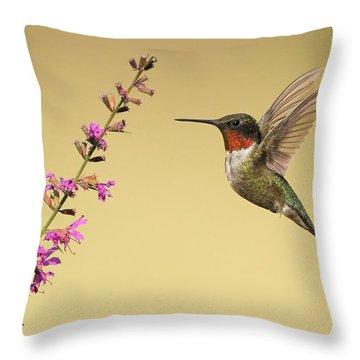 Flight Of A Hummingbird Throw Pillow by Daniel Behm