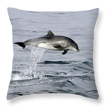 Flight Of The Dolphin Throw Pillow